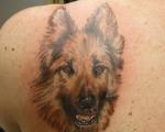 honden-10
