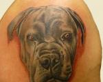 honden-4